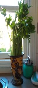 Celery in a vase