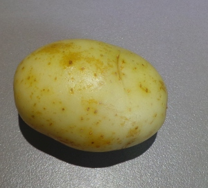 This is a potato.