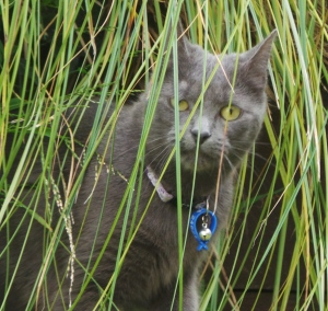The Accidental Cat explores a favourite bird hide of her clowder mates.